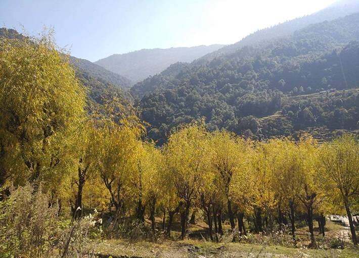 fall foliage in Myagdi