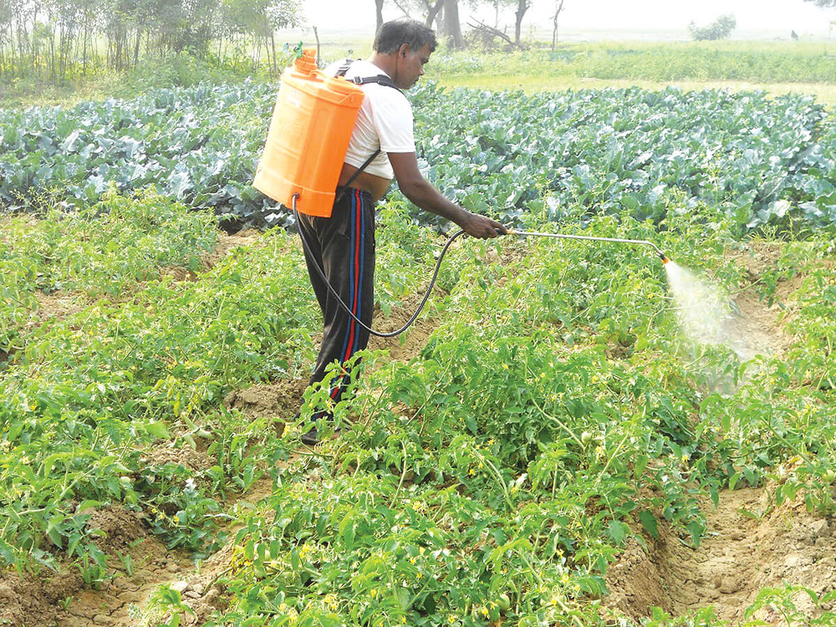 Banned pesticides are widely used in Nepal
