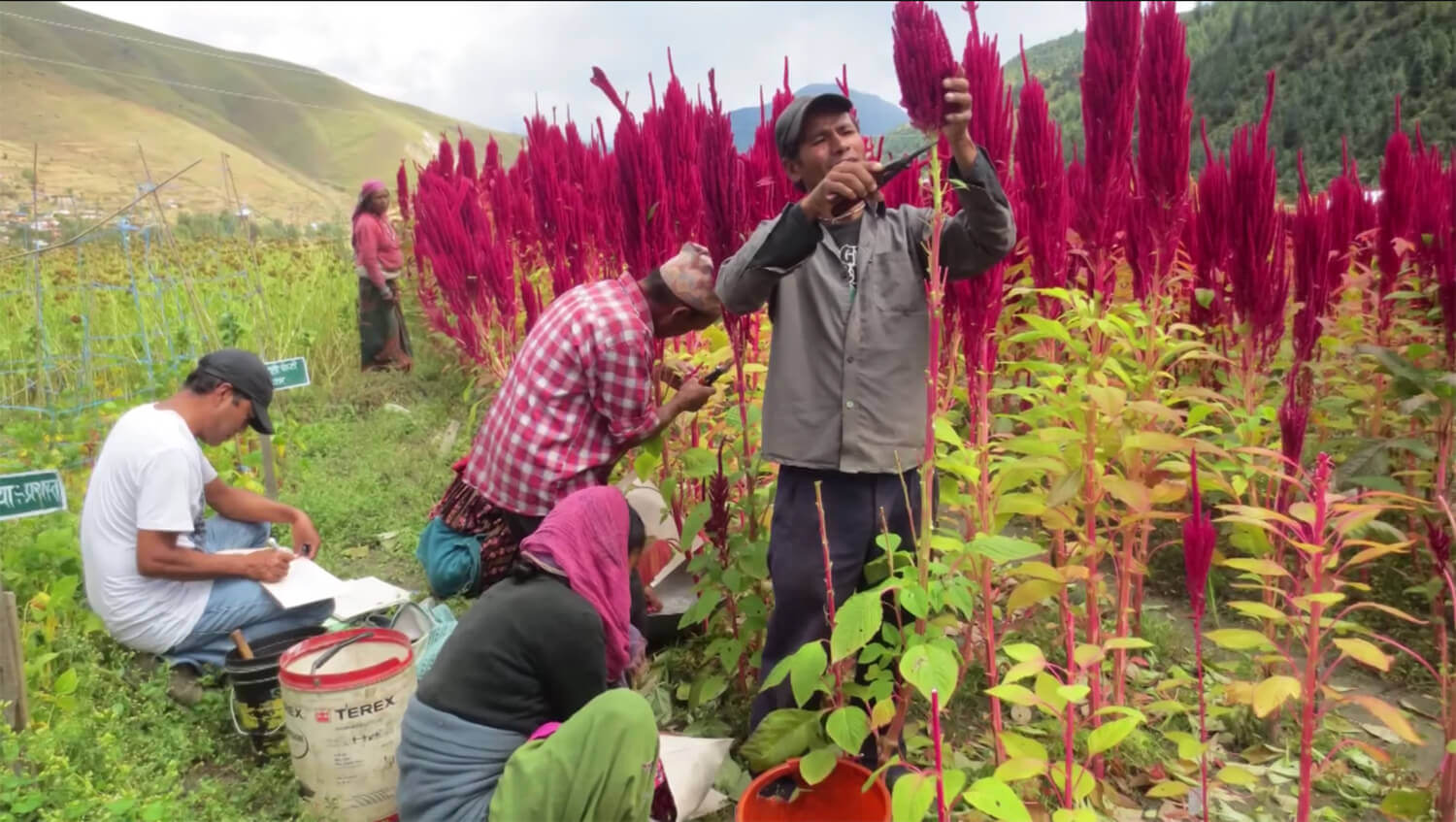 The superfoods of the Andes and the Himalaya