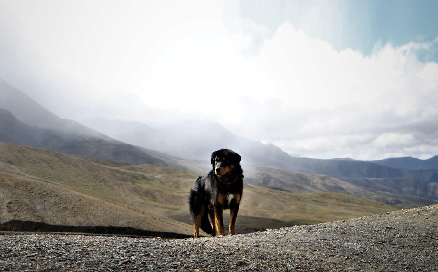 A dog with altitude