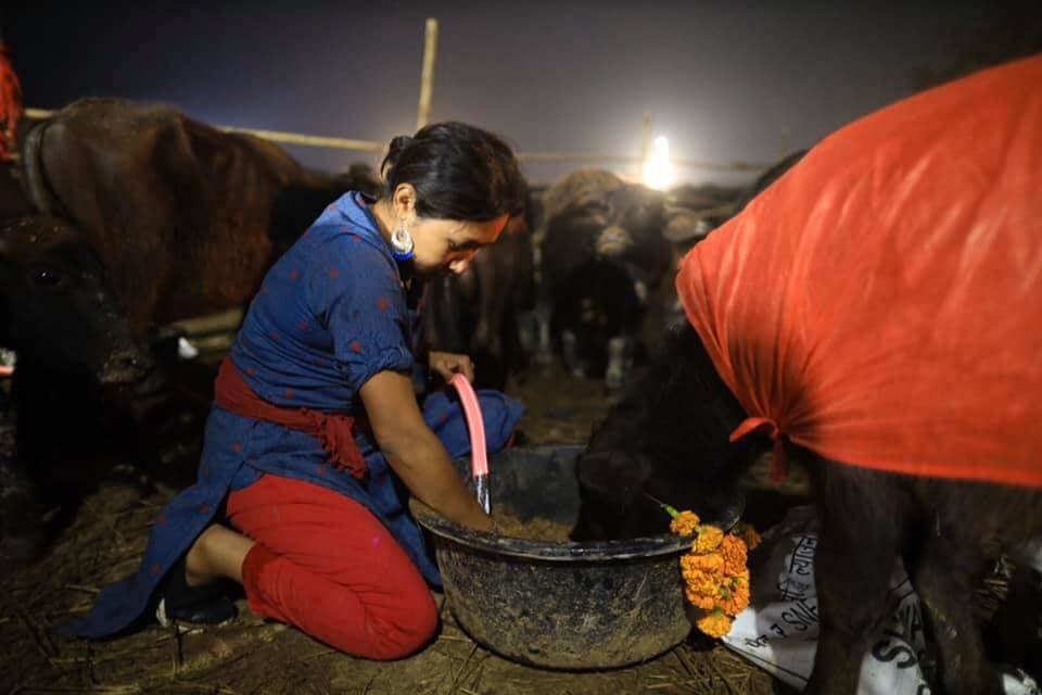Nepal's mass animal slaughter begins despite outcry