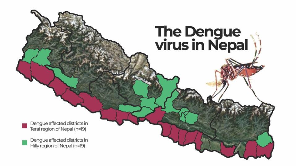 The dangers of the dengue virus