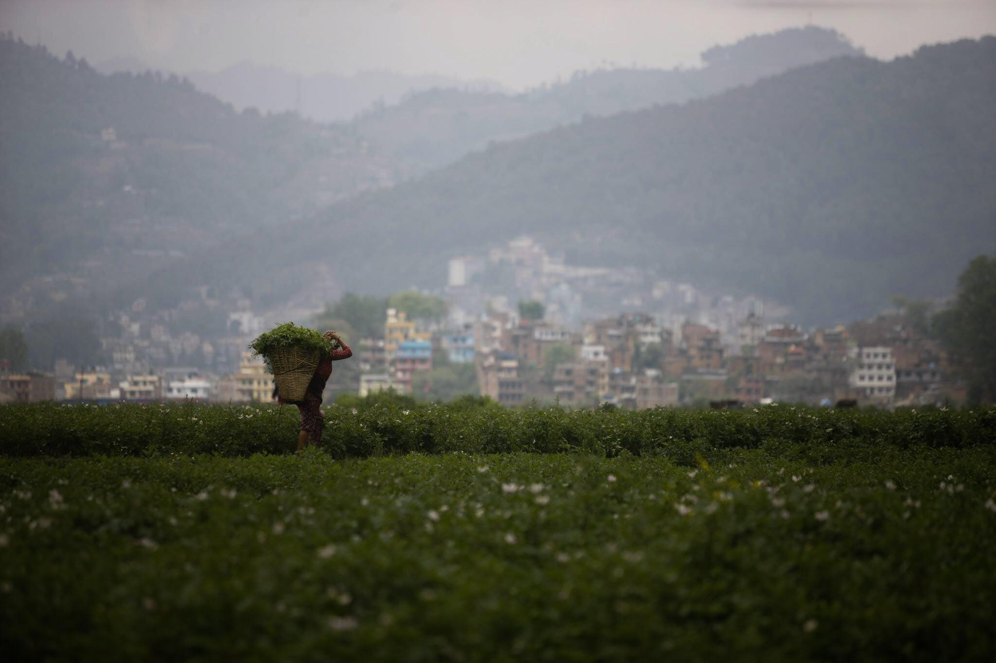 Pandemic offers chance to revive farming