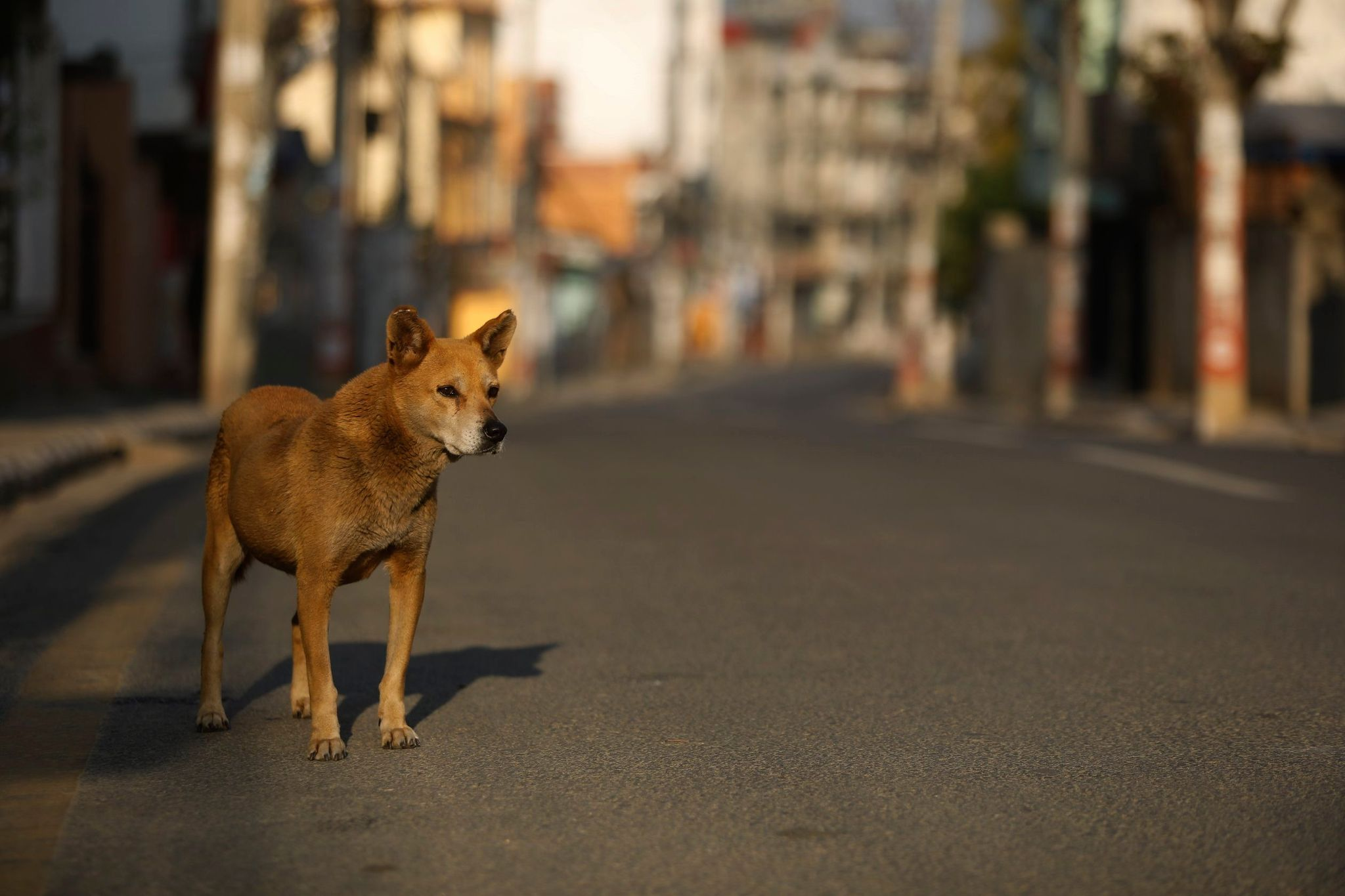 Dog bites man is still news in Nepal