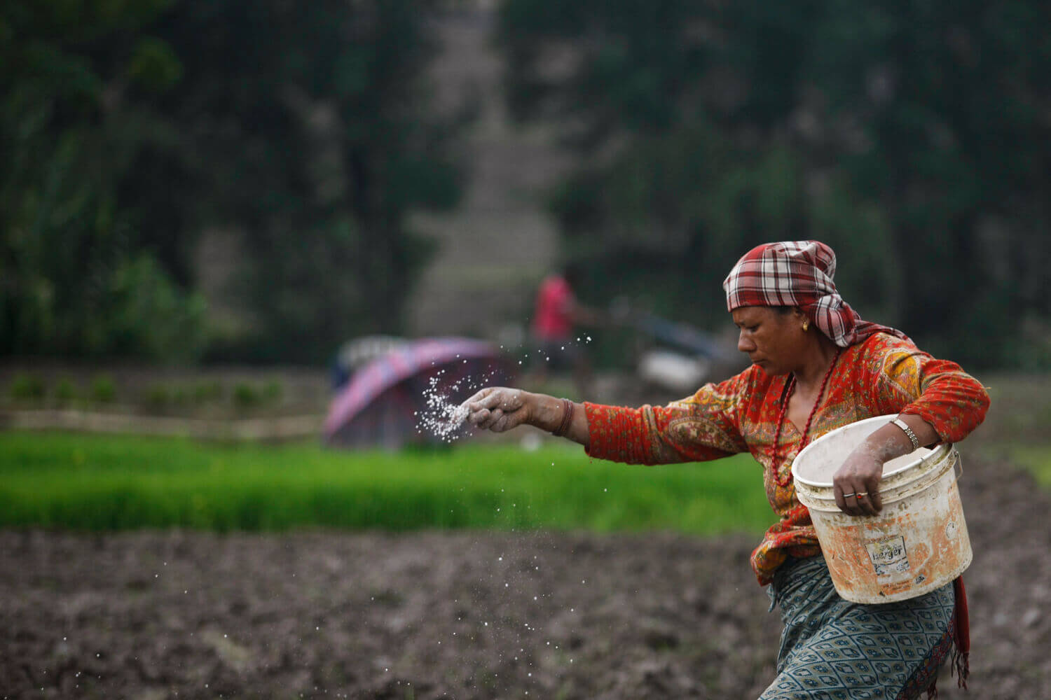 Corruption and Nepal's chronic fertiliser crisis