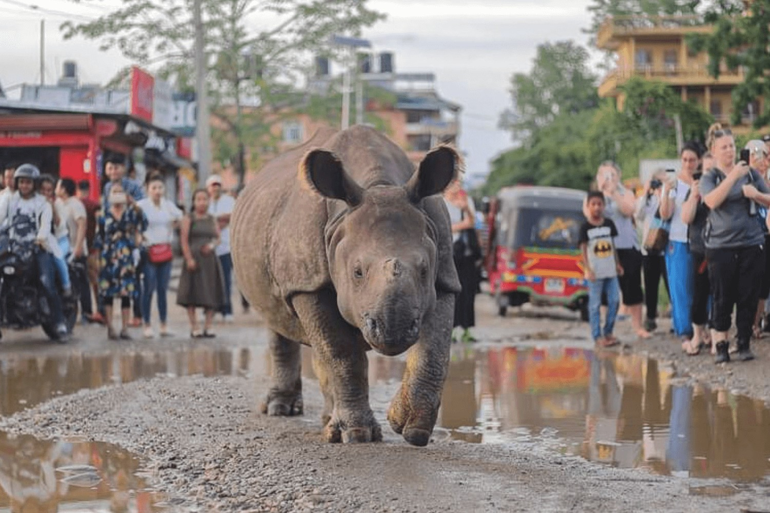 Climate change: new threat to Nepal's rhinos