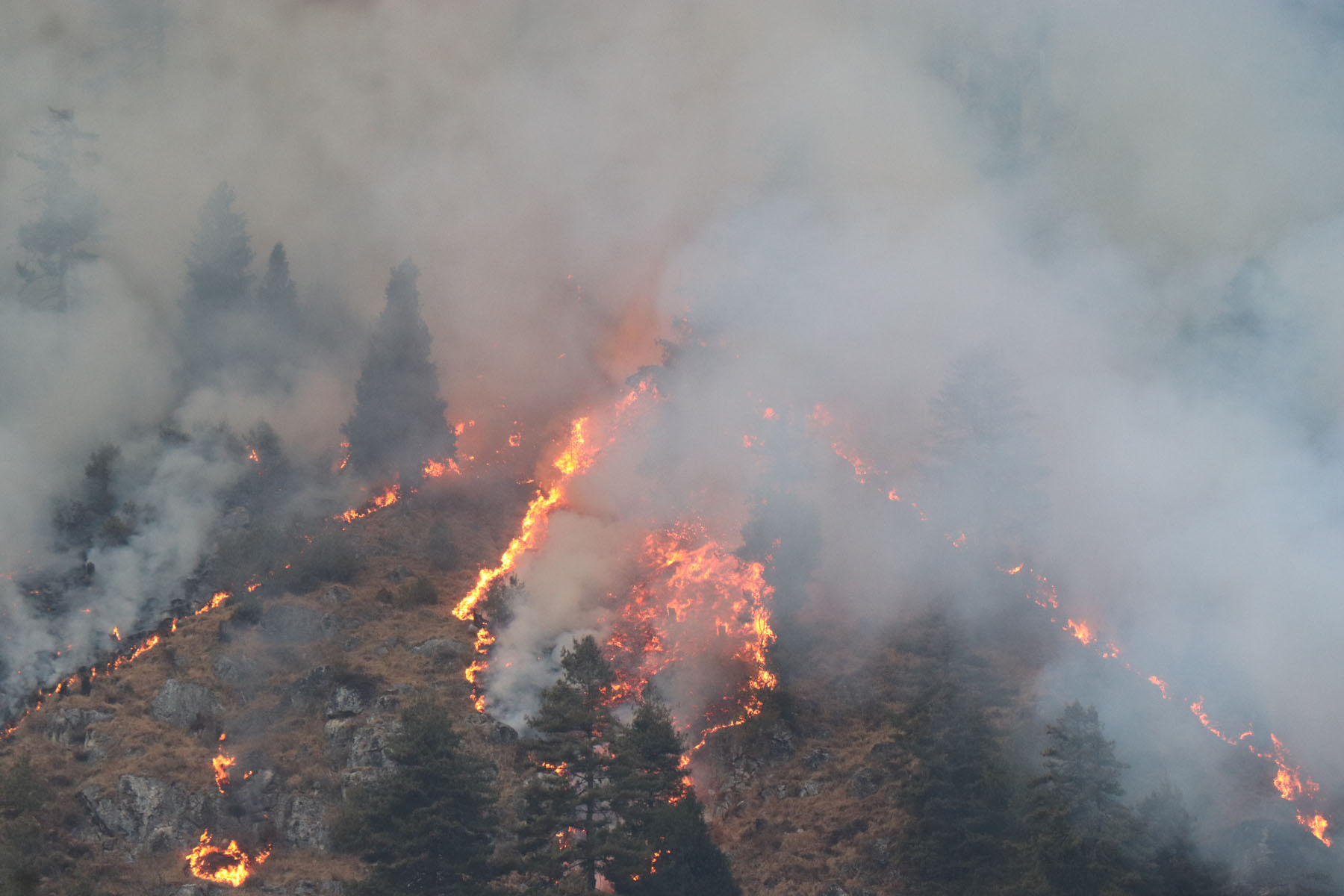 A forest fire has been raging on uncontrolled in Manang District for a month. The wildfire has so far destroyed 700 hectares of the forest rich in biodiversity.