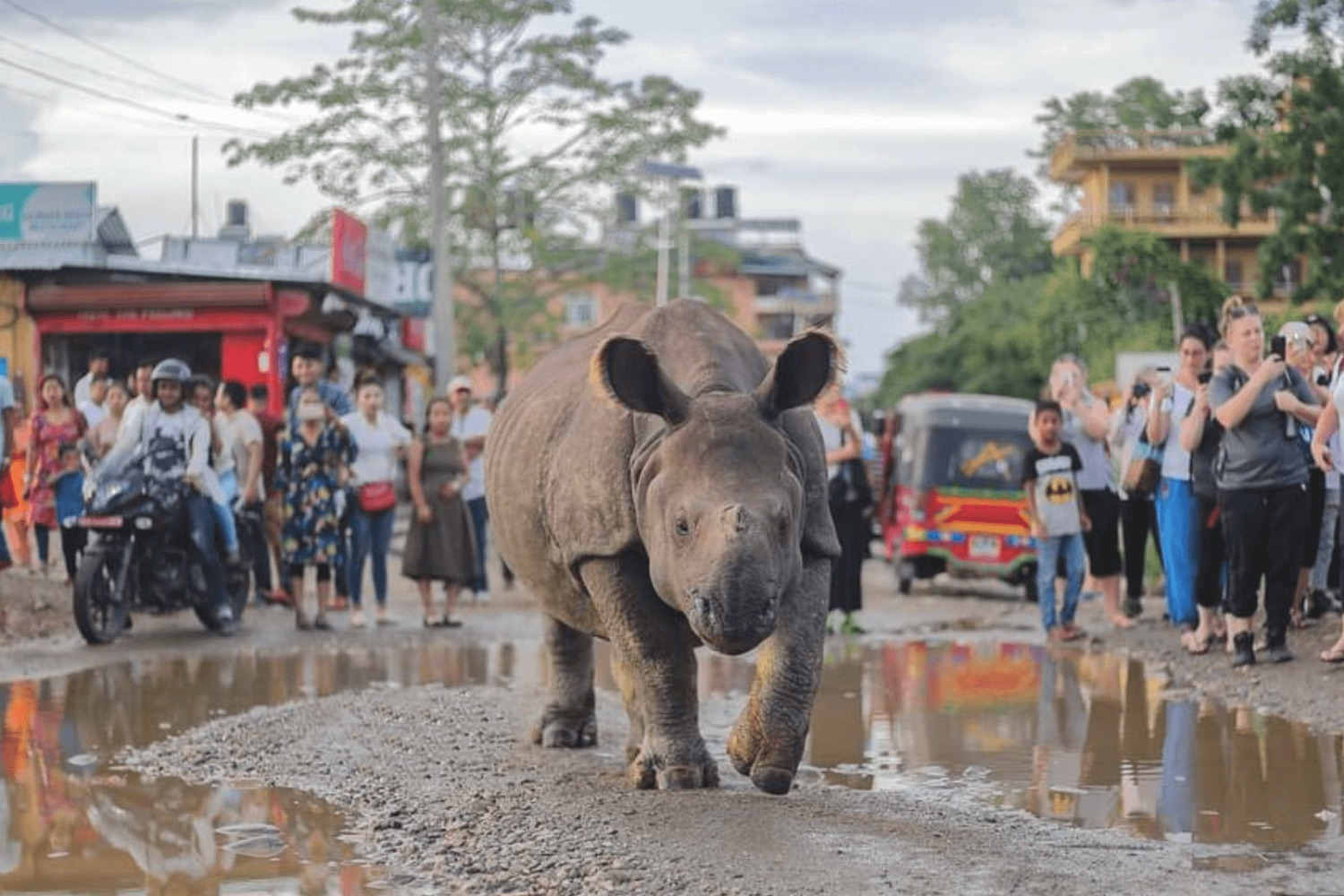 Where have Bardia's rhinos gone?