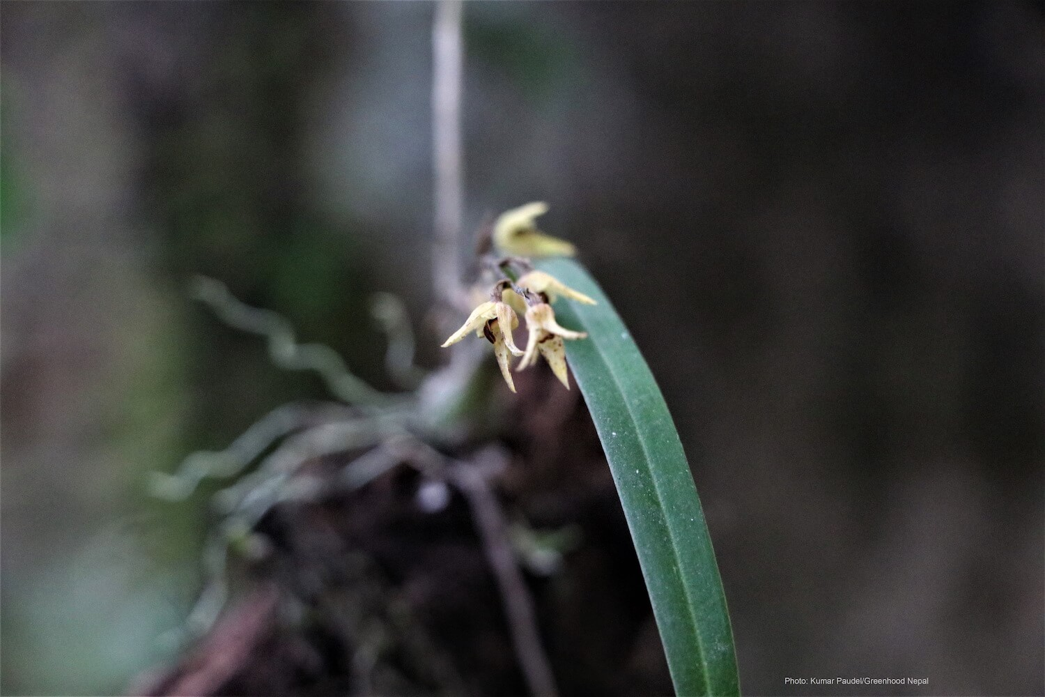 Saving nature by protecting orchids
