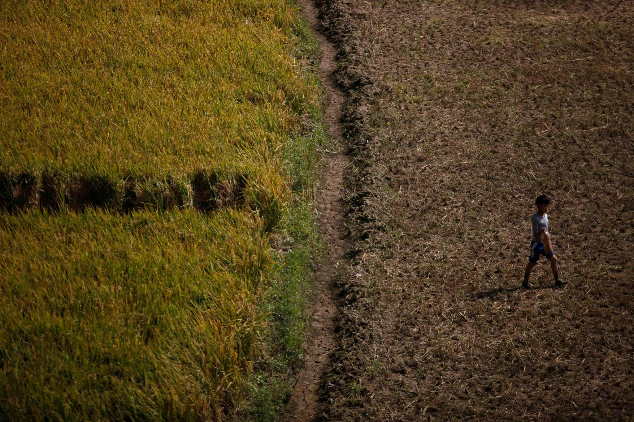 Nepal less and less able to feed itself