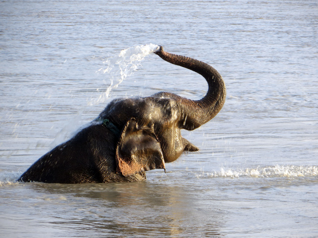 Water for Nepal's wildlife